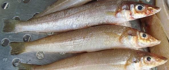 Silver Silago (Lady Fish)